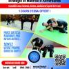 SMA - Stratégie et Maîtrise d