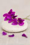 violettes zen